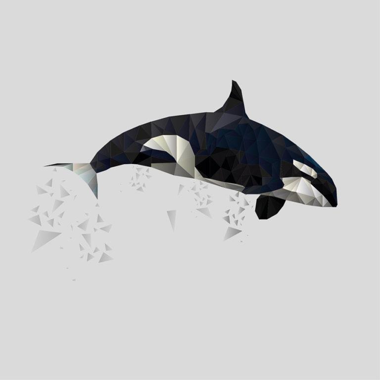 Polygon Orca